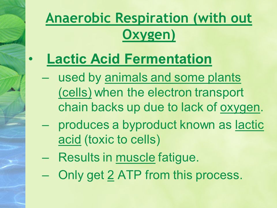 Anaerobic Respiration (with out Oxygen)