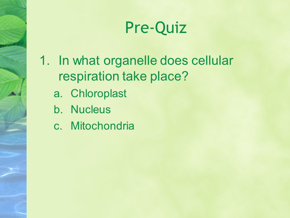 Pre-Quiz In what organelle does cellular respiration take place