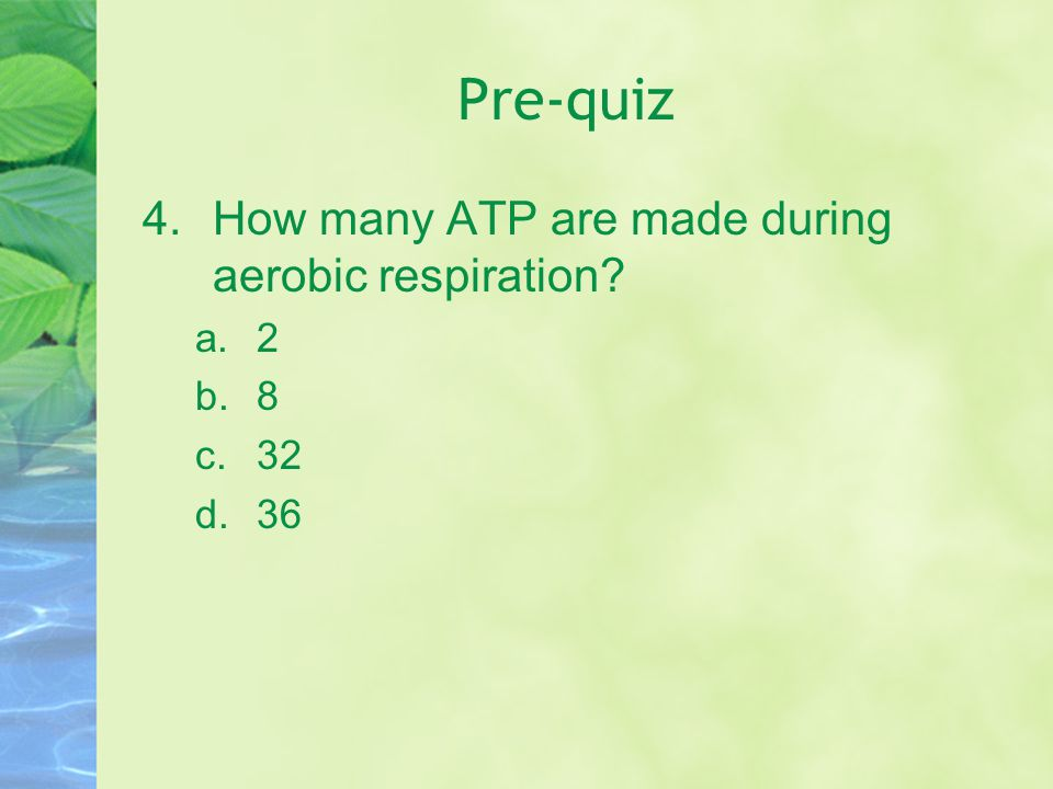 Pre-quiz How many ATP are made during aerobic respiration