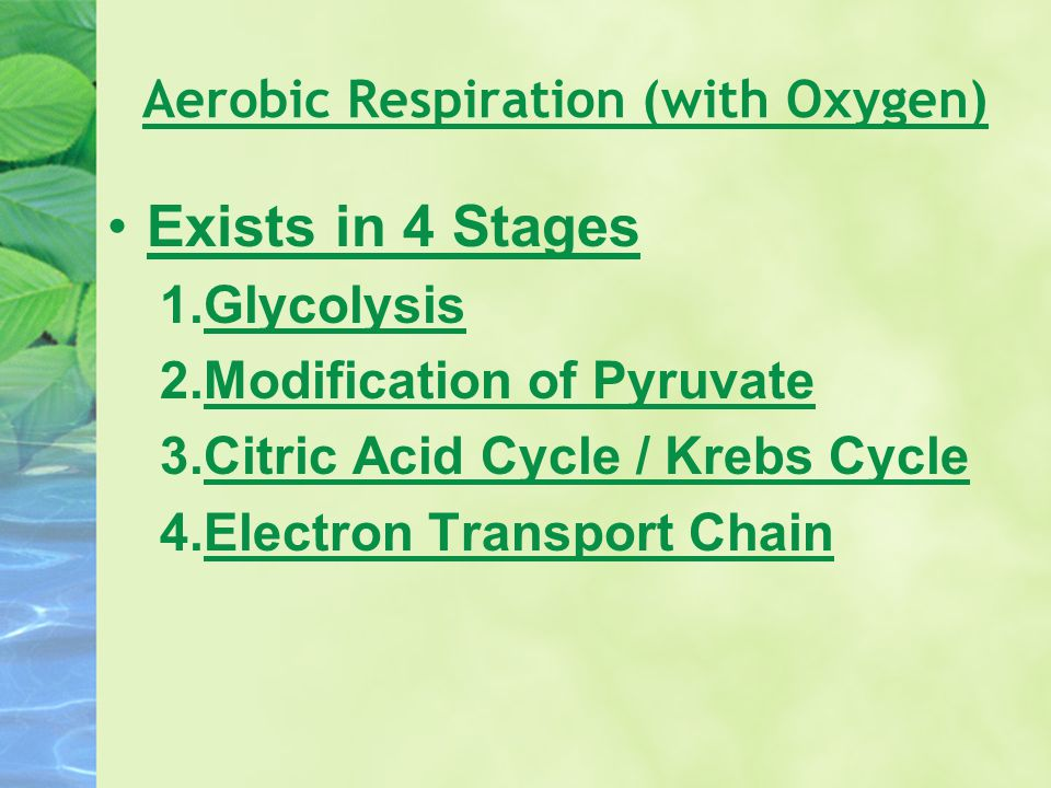 Aerobic Respiration (with Oxygen)