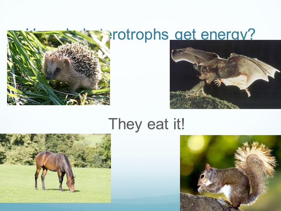 Heterotrophs Examples 97079 Investingbb