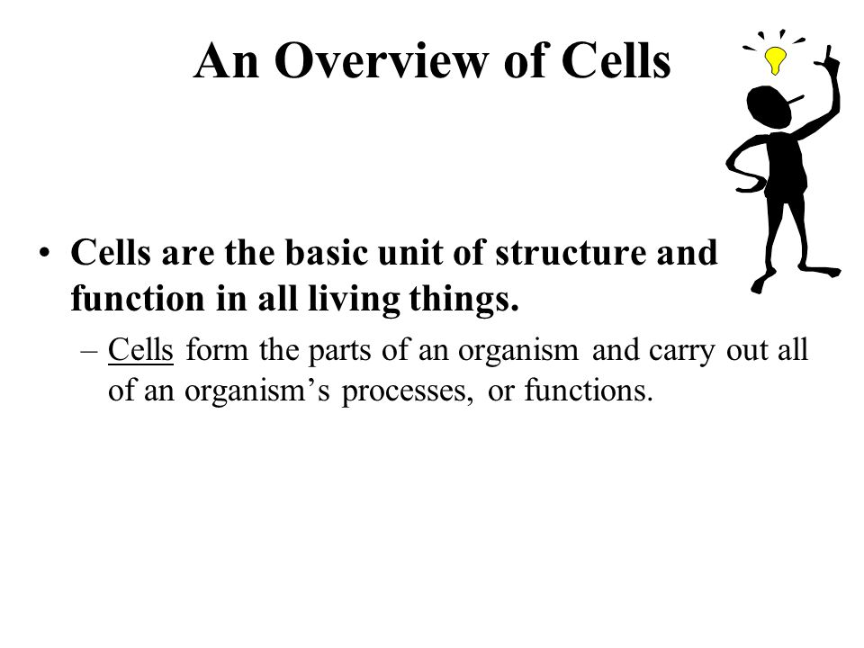 An Overview of Cells Cells are the basic unit of structure and function in all living things.