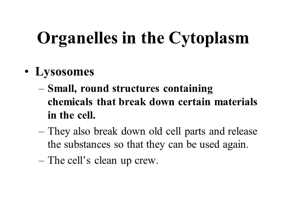 Organelles in the Cytoplasm