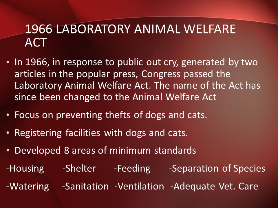 the issues of the animal abuse and the animal welfare act of 1966 Prior to the animal welfare act, animal welfare law was largely reactive and action could only be taken once an animal had suffered unnecessarily.