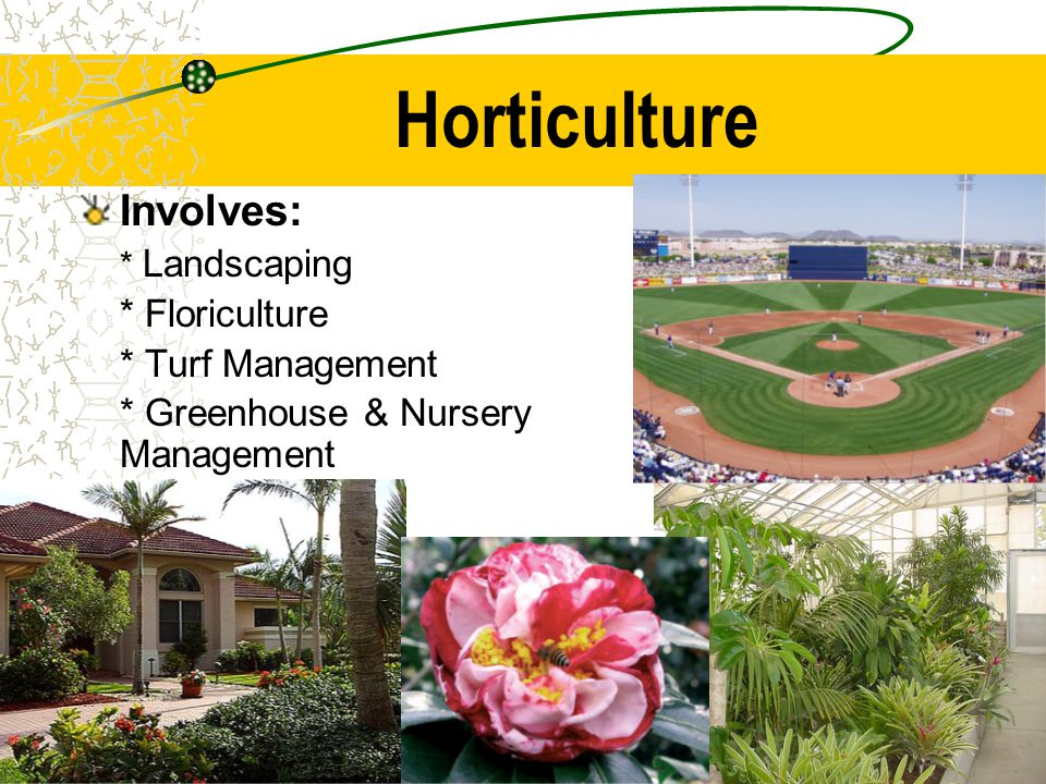 Horticulture Involves: * Floriculture * Turf Management