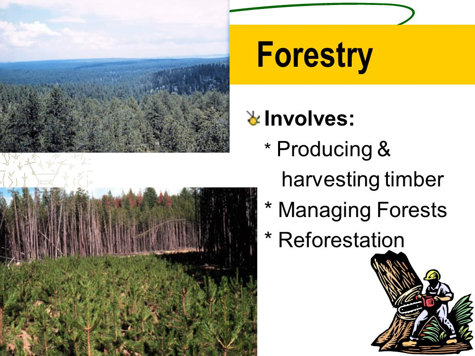Forestry Involves: harvesting timber * Managing Forests