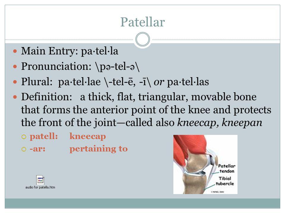 Medical Vocabulary The Skeletal System. - ppt video online download