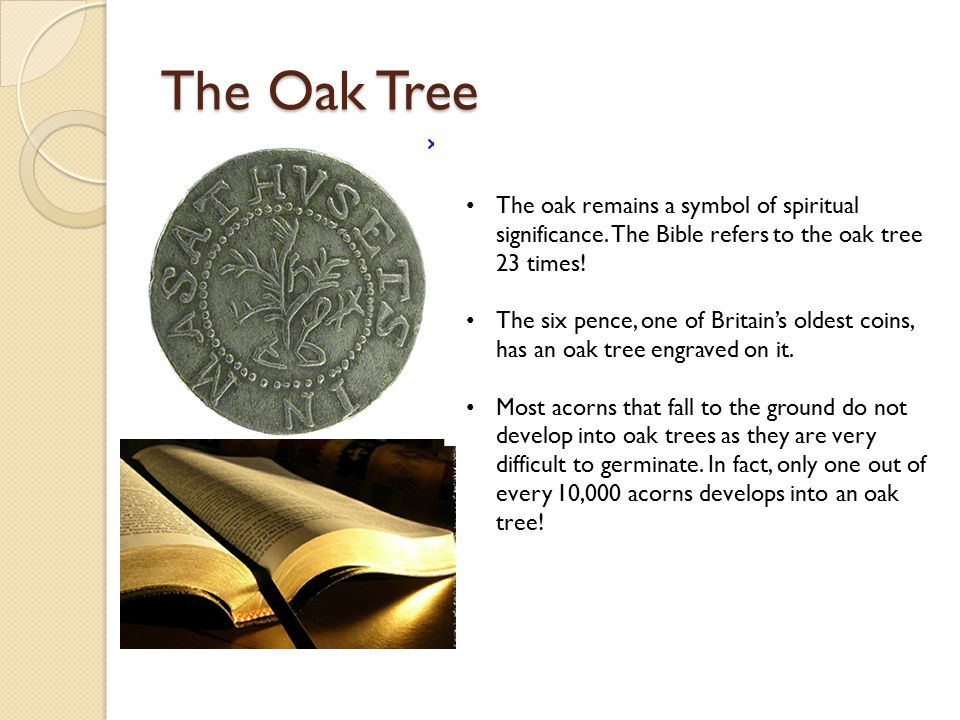 Trees And Their Meanings Tree Of Life Symbol Meaning Www