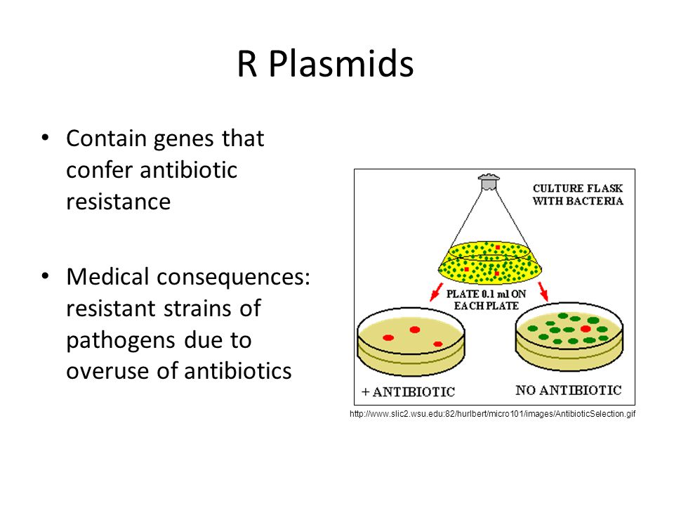 R Plasmids Contain genes that confer antibiotic resistance
