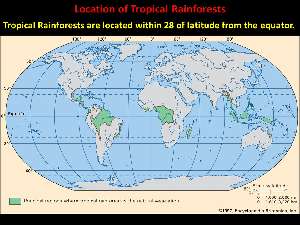 The tropical rainforest biome ppt download location of tropical rainforests sciox Image collections
