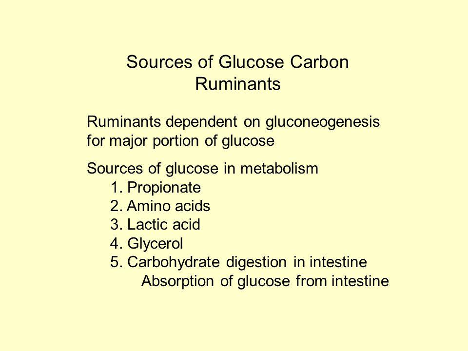 propionate metabolism pathway