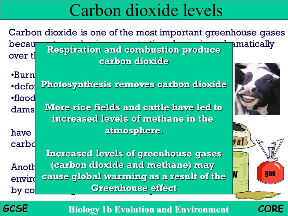 deforestation carbon dioxide and fuel global Greenhouse gases that fuel global warming  the relationship between carbon dioxide, deforestation, and climate change  • reforestation: impact on climate.
