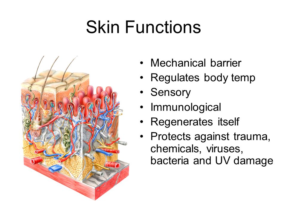 mechanical barrier against infection How does the skin act as a barrier skin ie the epidermis is made of keratinized cells to protect the skin against harmful substances and.