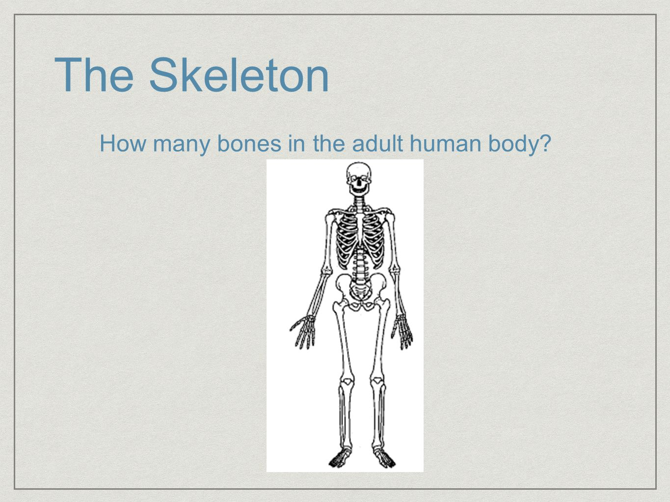 Bones are in the adult body