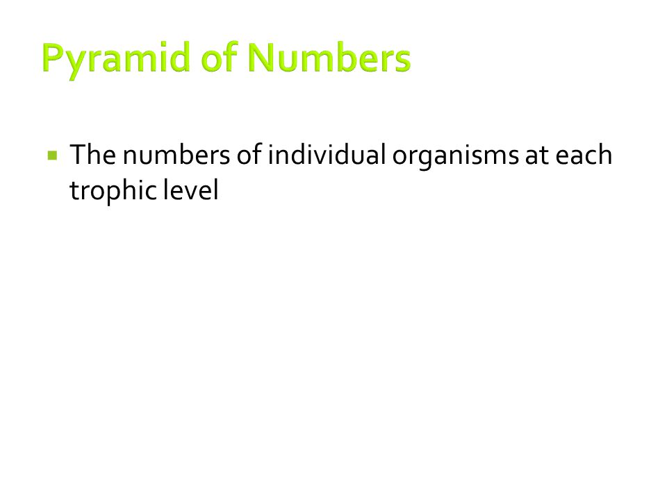 Pyramid of Numbers The numbers of individual organisms at each trophic level