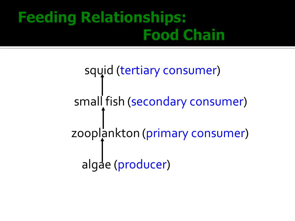 Feeding Relationships: Food Chain