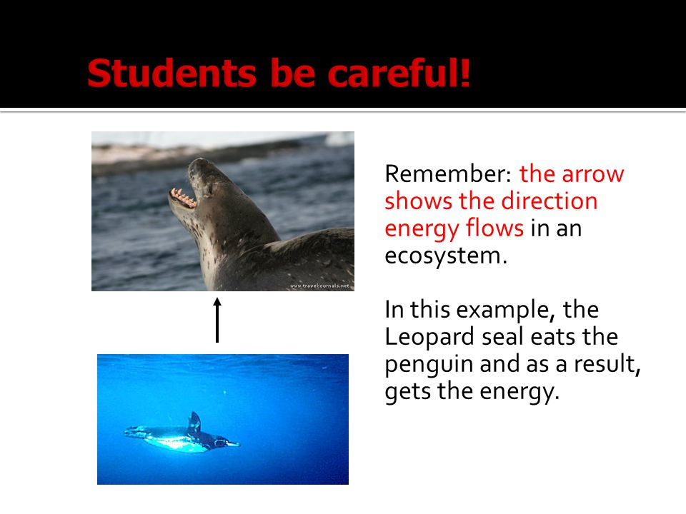 Students be careful! Remember: the arrow shows the direction