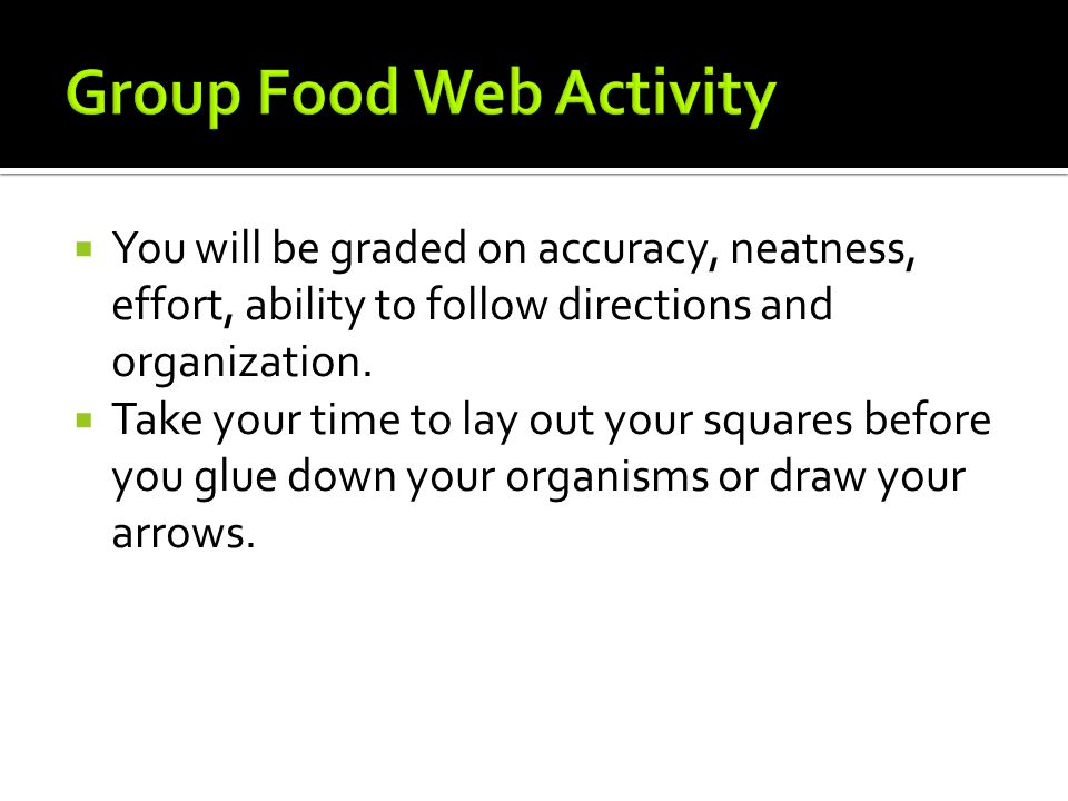 Group Food Web Activity
