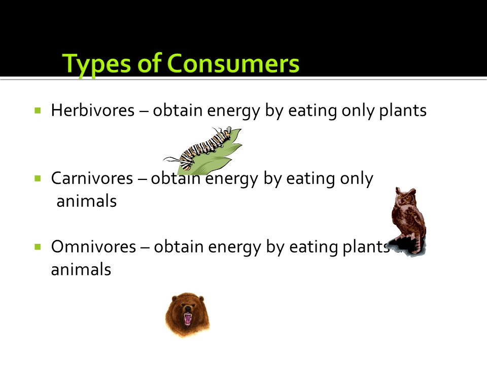 Types of Consumers Herbivores – obtain energy by eating only plants