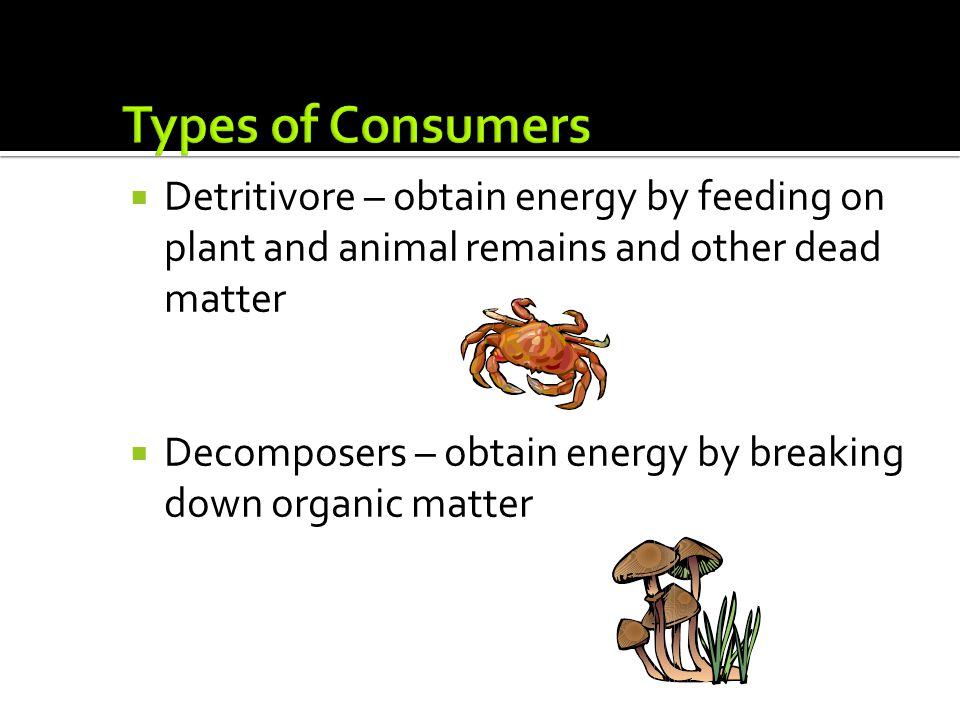 Types of Consumers Detritivore – obtain energy by feeding on plant and animal remains and other dead matter.