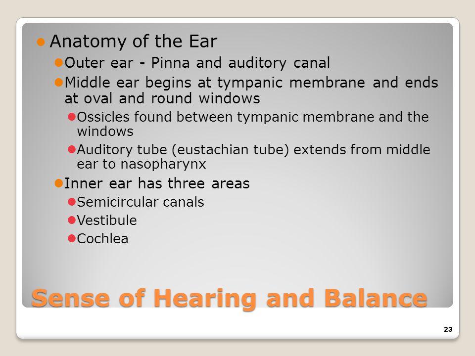 Biology 9th ed Sylvia Mader ppt download – The Ear Hearing and Balance Worksheet