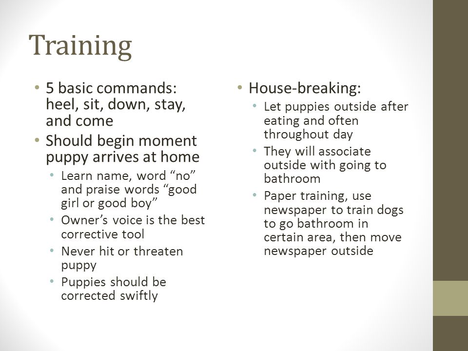 Dog breeds id vet tech ppt video online download for Training dogs to go to the bathroom outside