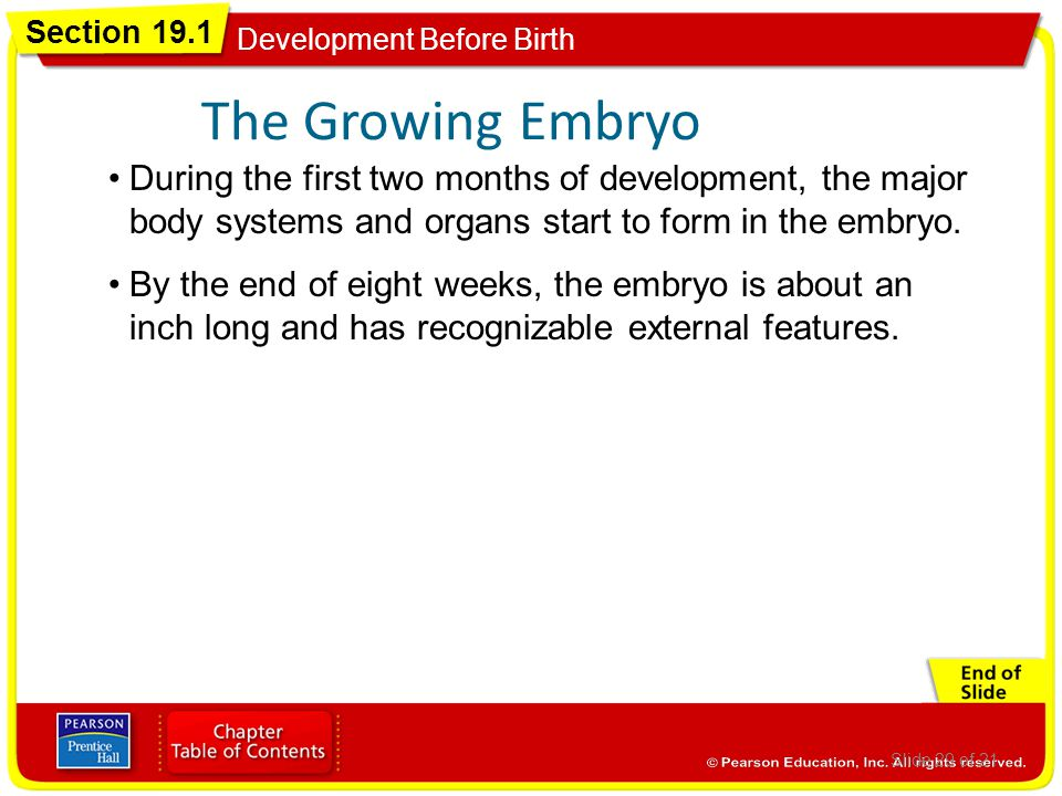 Pregnancy, Birth, Childhood - ppt download