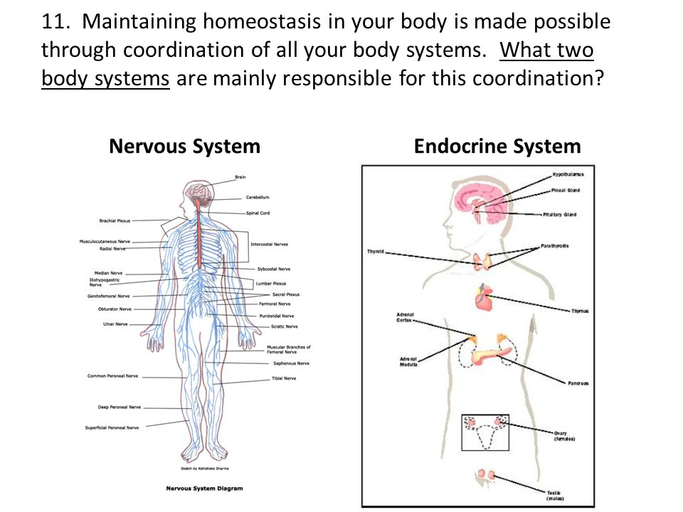 Human body systems interactions test review ppt video online 12 11 ccuart Image collections