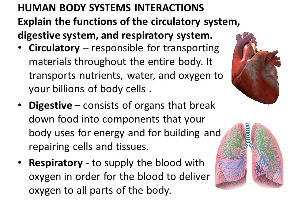 Human Body Systems Interactions Explain The Functions Of The