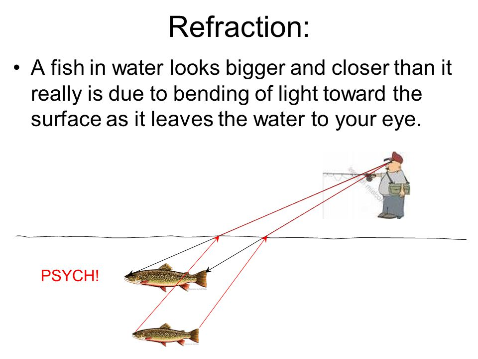 Refraction: A fish in water looks bigger and closer than it really is due to bending of light toward the surface as it leaves the water to your eye.