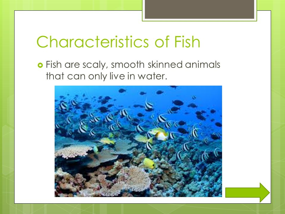 Animal classifications ppt video online download for Characteristics of fish