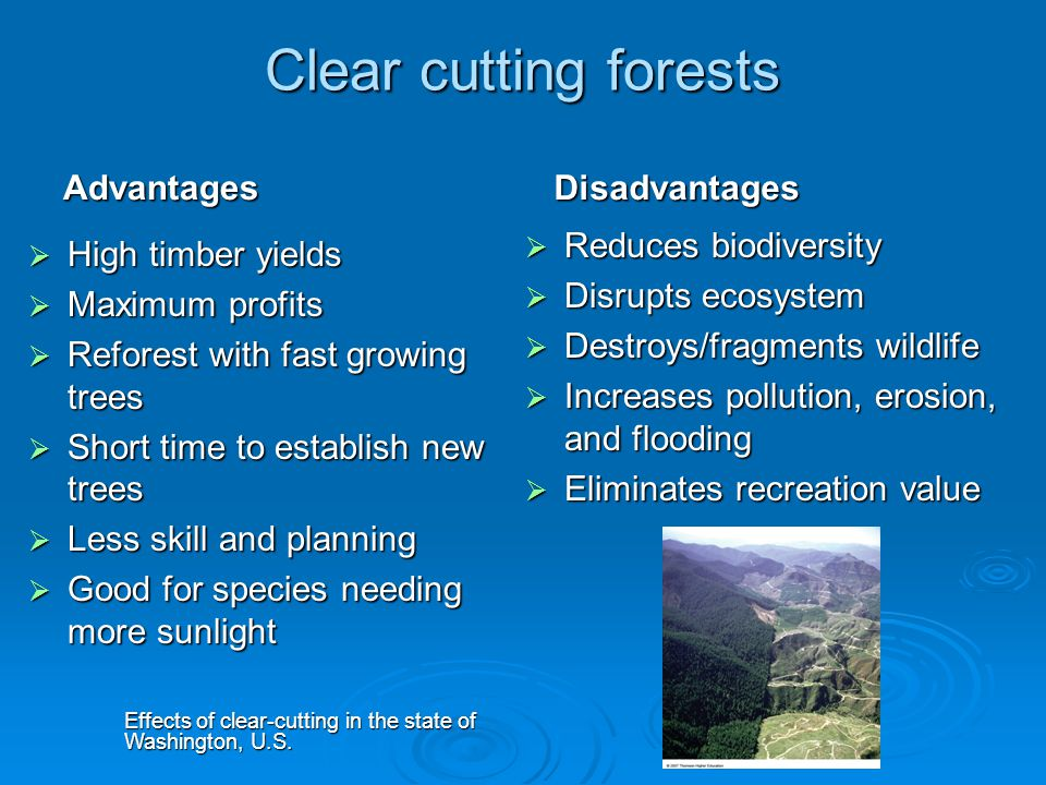 advantages and additionally potential problems involving reforestation