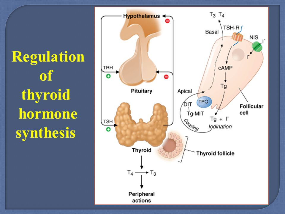thyroid hormone synthesis Thyroid hormone synthesis, plasma membrane transport and metabolism 77 effect of tsh on iodide transport has been observed in in vivo studies in the.
