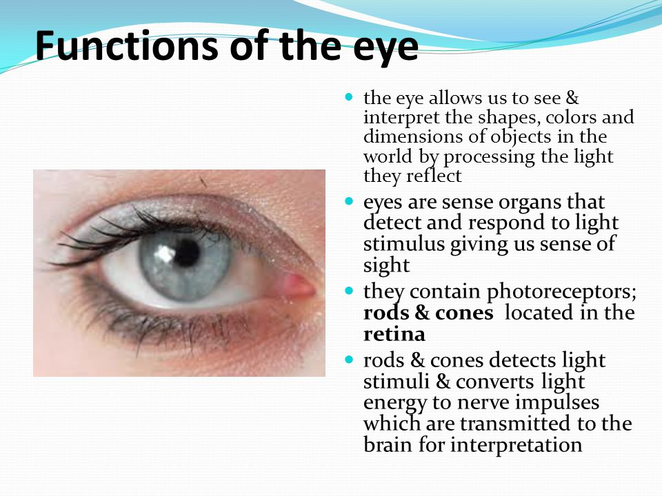 function human eye Human stereo color vision is a very complex process that is not completely understood a neuro-membrane that functions as the imaging surface at the rear of the eye color vision defects can also be acquired as a special function of human visual perception.