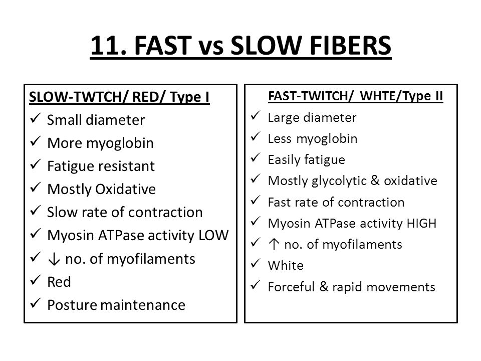 Building Muscle Mass Fast Twitch Vs Slow Twitch