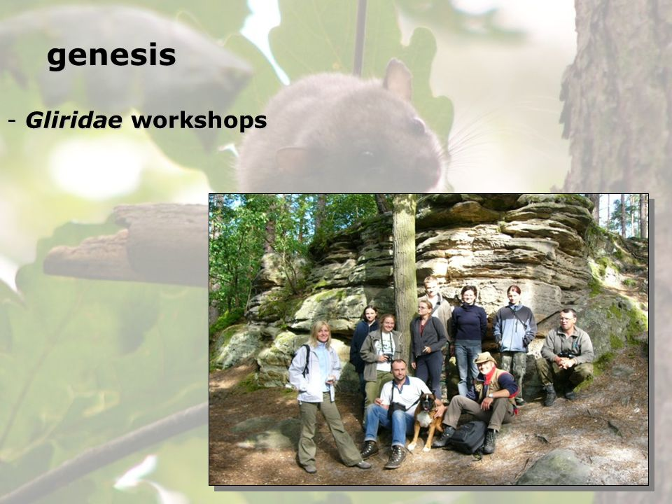 genesis Gliridae workshops