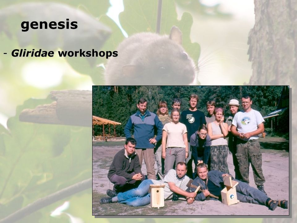 genesis Gliridae workshops
