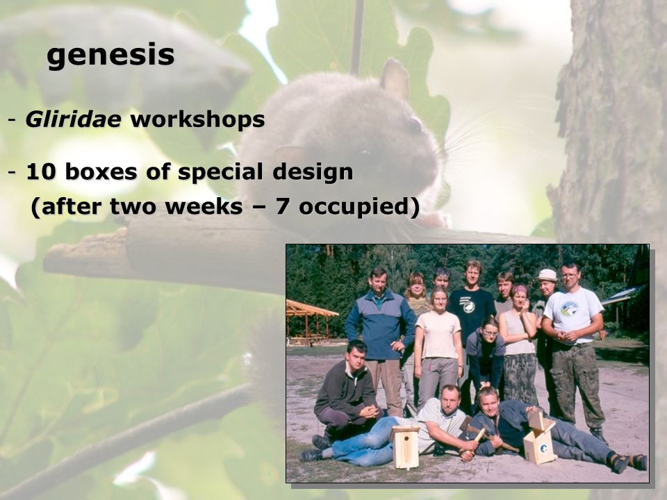 genesis Gliridae workshops 10 boxes of special design