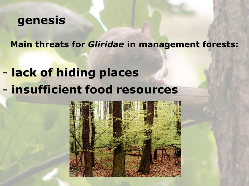 Main threats for Gliridae in management forests: