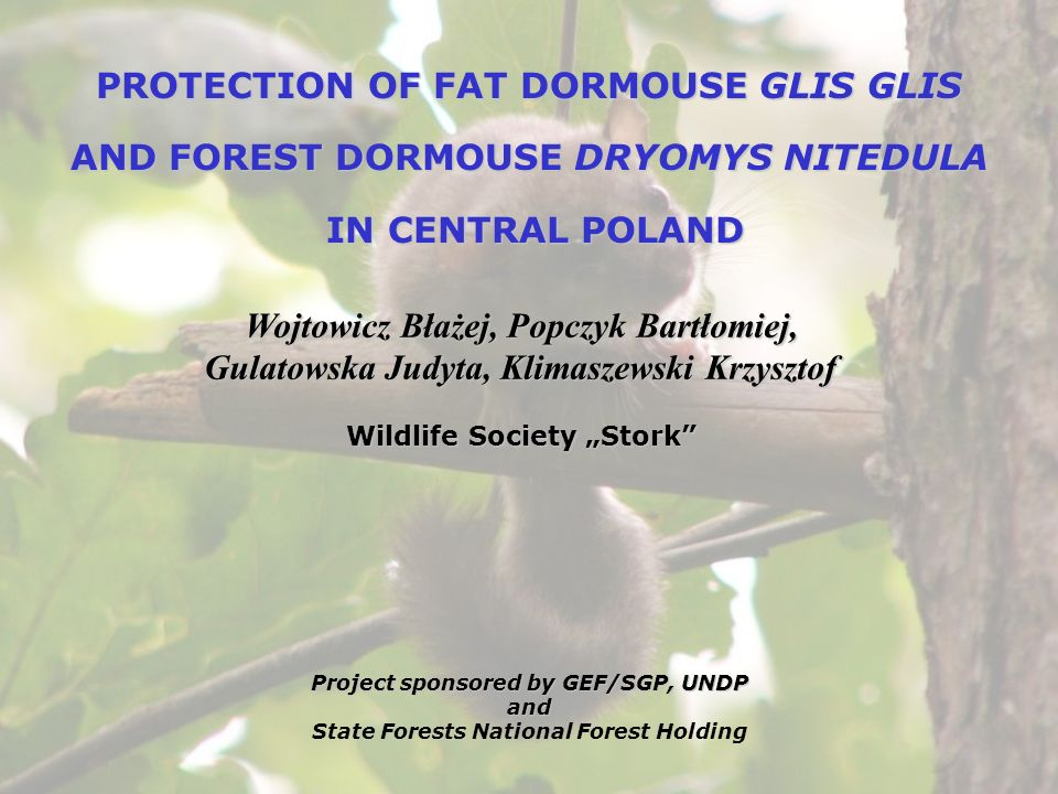 PROTECTION OF FAT DORMOUSE GLIS GLIS