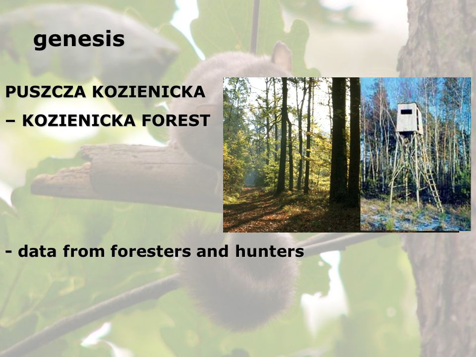 genesis PUSZCZA KOZIENICKA – KOZIENICKA FOREST