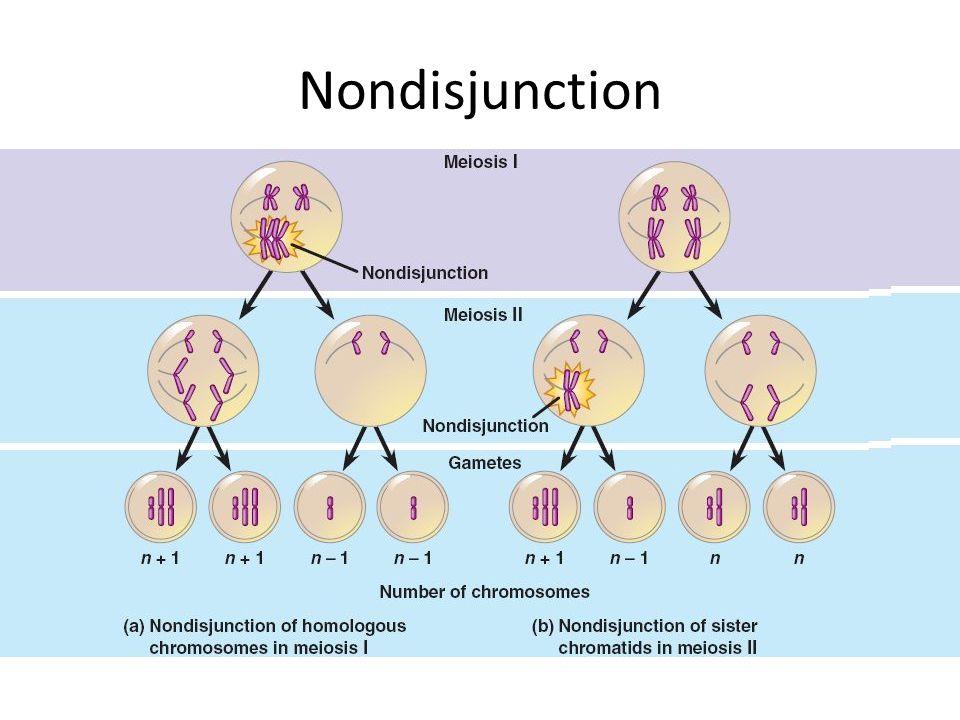Chromosome karyotype study guide