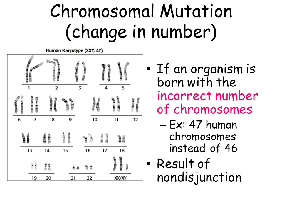 Chromosomal Mutation (change in number)