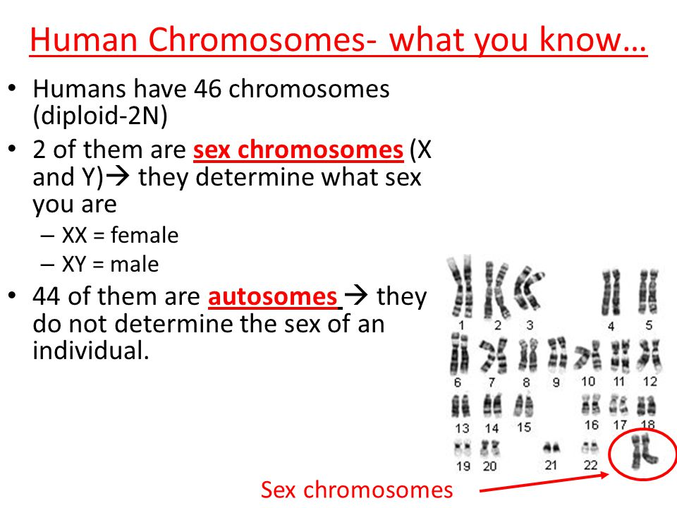 Human Chromosomes- what you know…