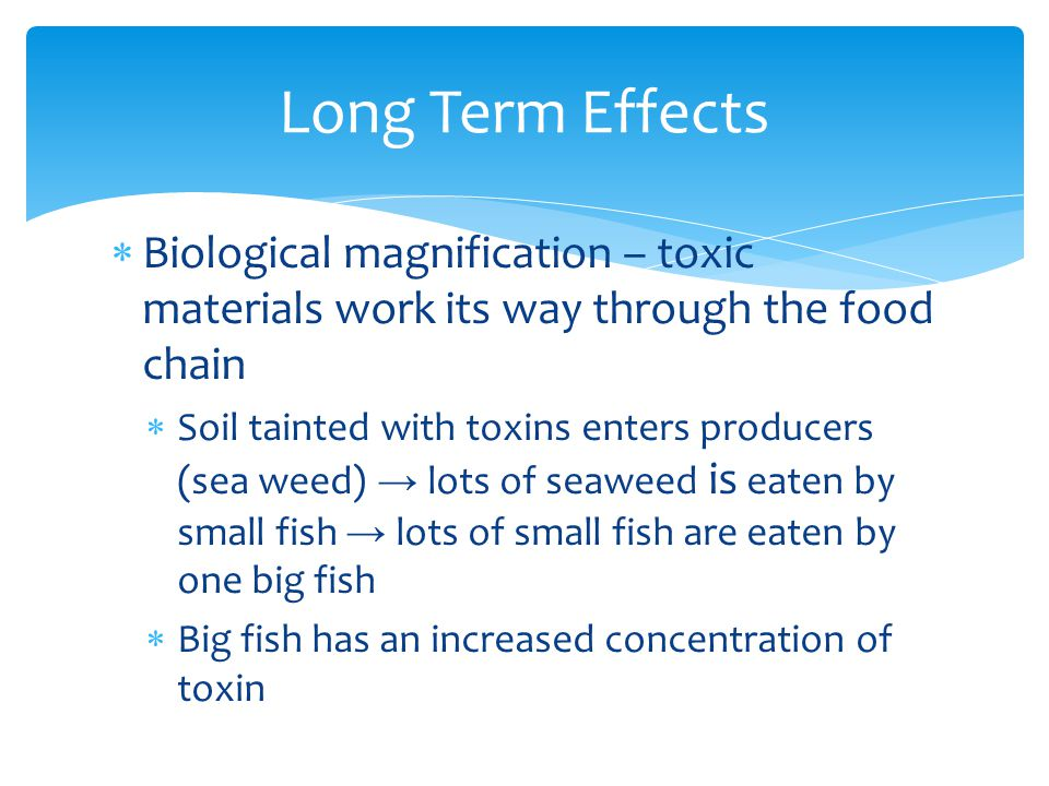 Long Term Effects Biological magnification – toxic materials work its way through the food chain.
