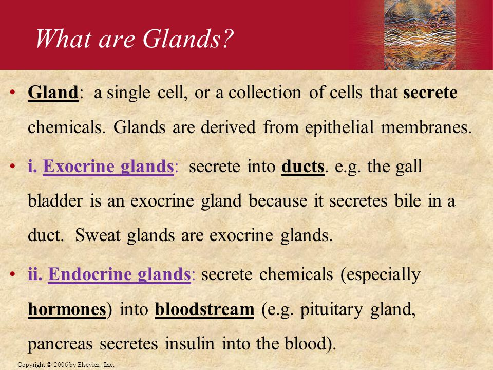 What are Glands Gland: a single cell, or a collection of cells that secrete chemicals. Glands are derived from epithelial membranes.