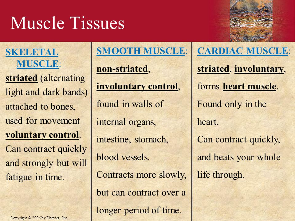 Muscle Tissues SMOOTH MUSCLE: non-striated, involuntary control,
