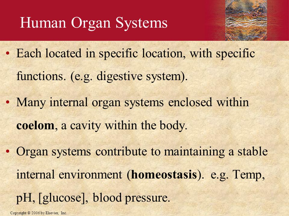 Human Organ Systems Each located in specific location, with specific functions. (e.g. digestive system).