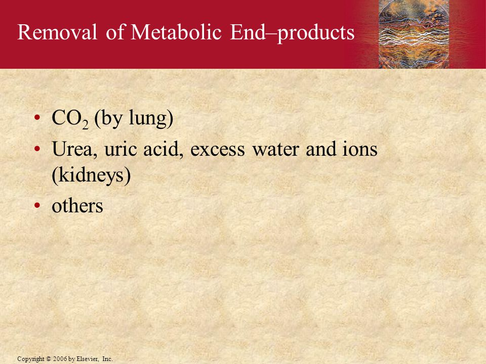 Removal of Metabolic End–products