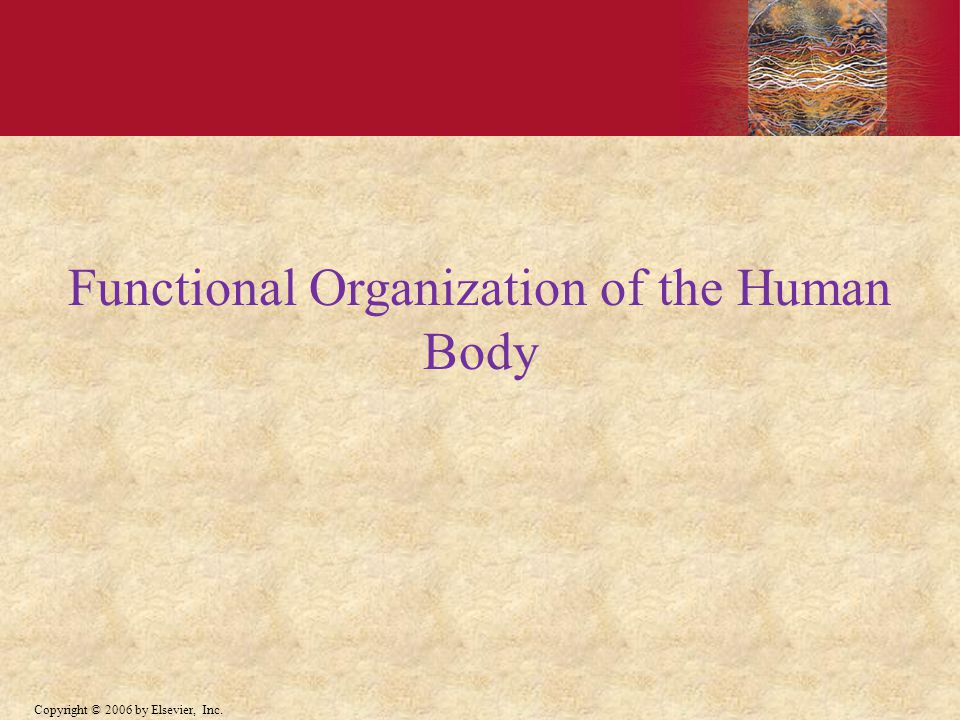 Functional Organization of the Human Body